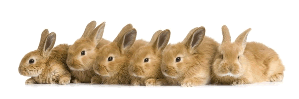 Rabbits [see Acknowledgements for Image Credit]